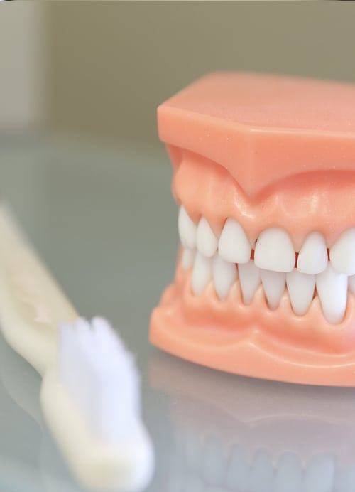 hygiene-teeth-model