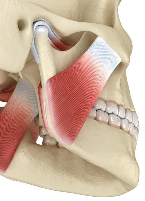 temporomandibular-joint